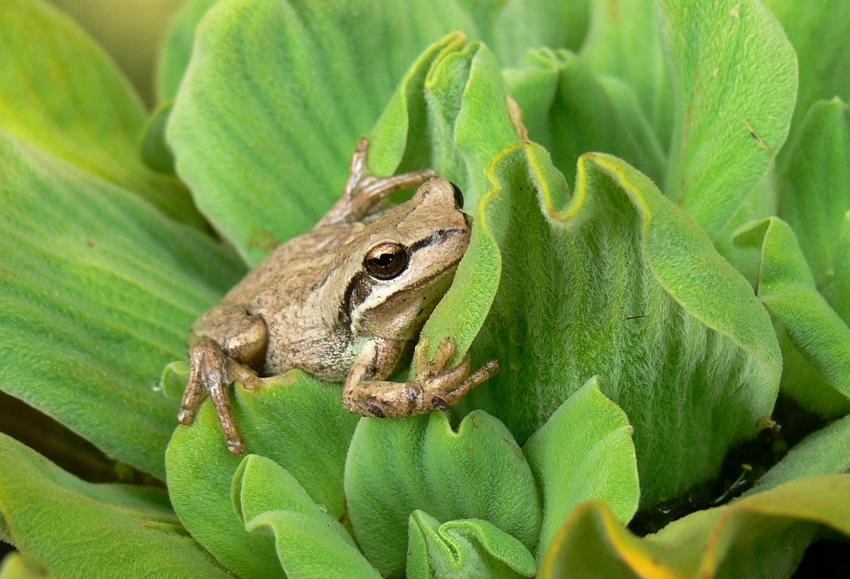 Froggy by postaldude66