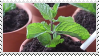 [stamp] plants by environmentalism