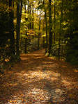 Fairytale Forest Path by Majikku-Tejina