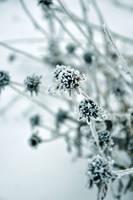 Frozen in Time by Majikku-Tejina