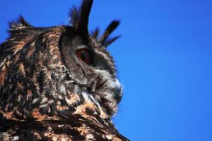 Ruffle'd My Feathers by emmalemmadingdong