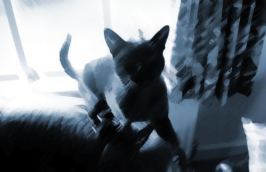 Purty Doom Cat by gorpie
