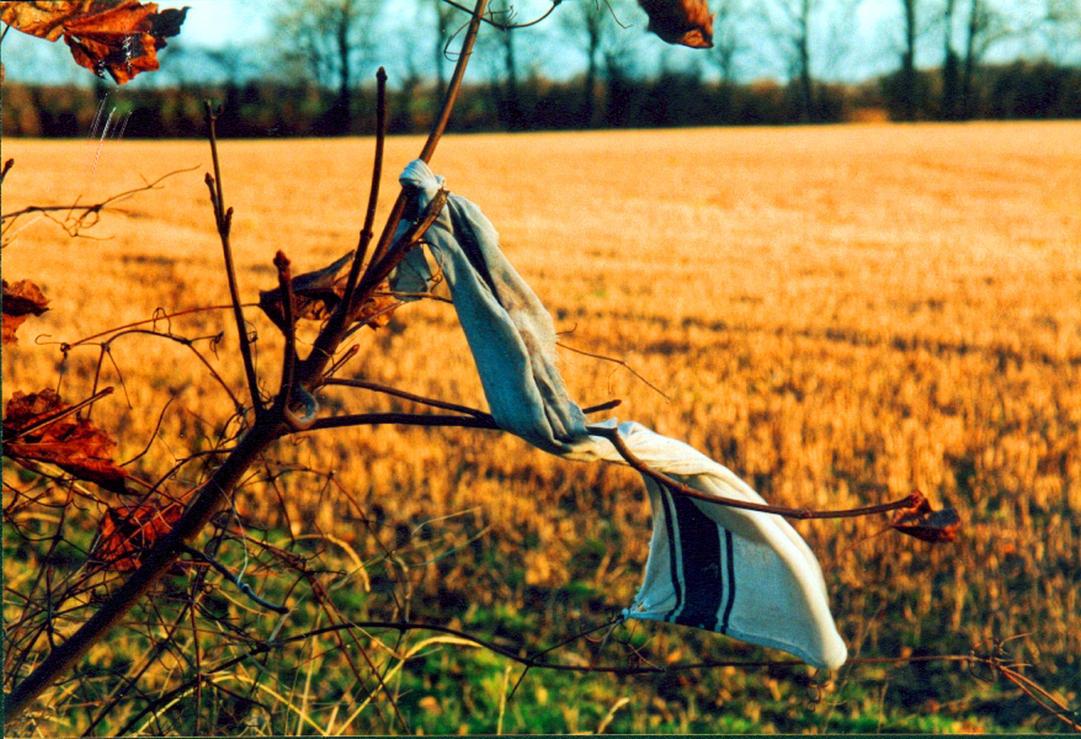 Rag In The Wind by gorpie