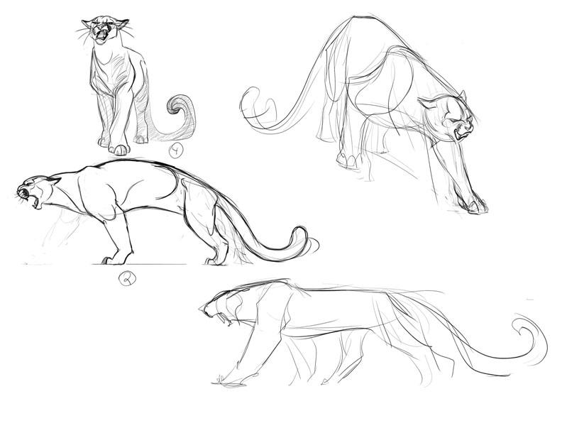 Cougar Concepts2 By Davidsdoodles On DeviantArt