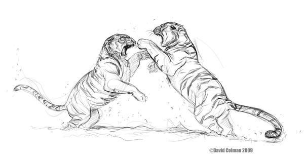 SiberianTigers_fight by davidsdoodles
