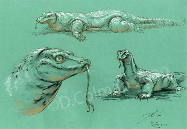 The Art Of Character Design With David Colman Volume I : Komodo dragon studies la zoo by davidsdoodles on deviantart