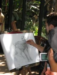 Animal Drawing Workshop Pic3