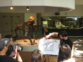 Animal Drawing Workshop Pic5