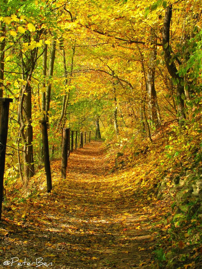 Golden forest by PeterBen