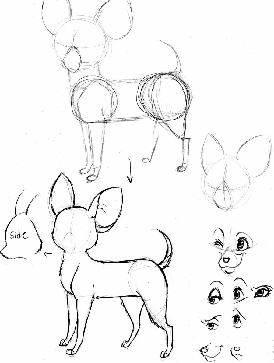chihuahua tutorial by foxsnout45 on deviantart