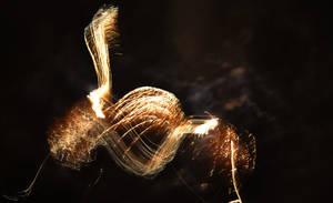 Firework bunny by Samtheengineer