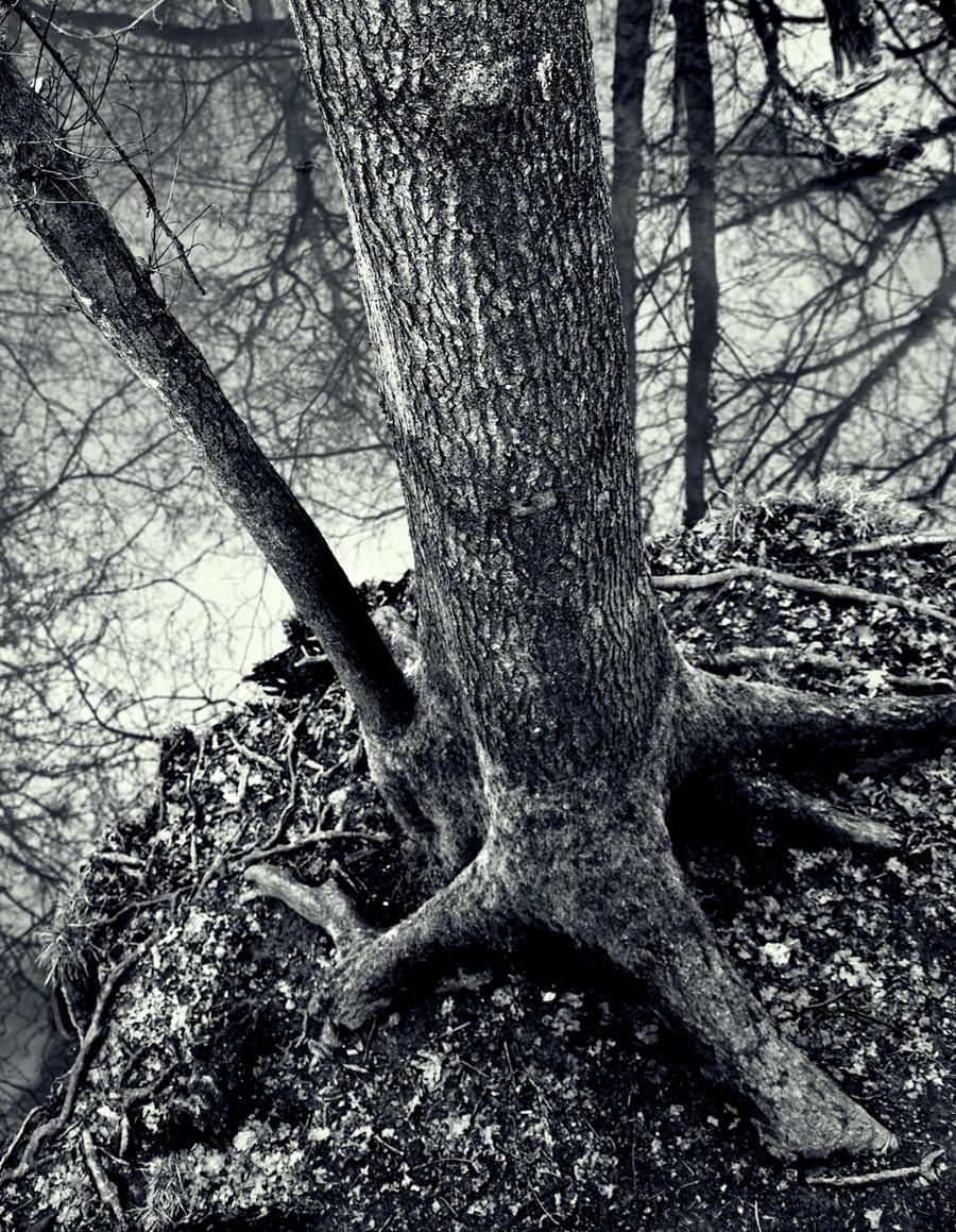 Tree Island by Samtheengineer
