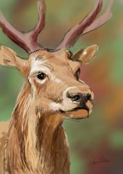 Deer by froggywoggy11