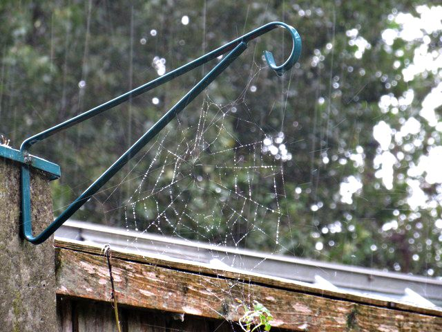 Rain droplets on a web. by BeckysSnaps