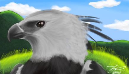 Majestic Harpy  by Silverado98