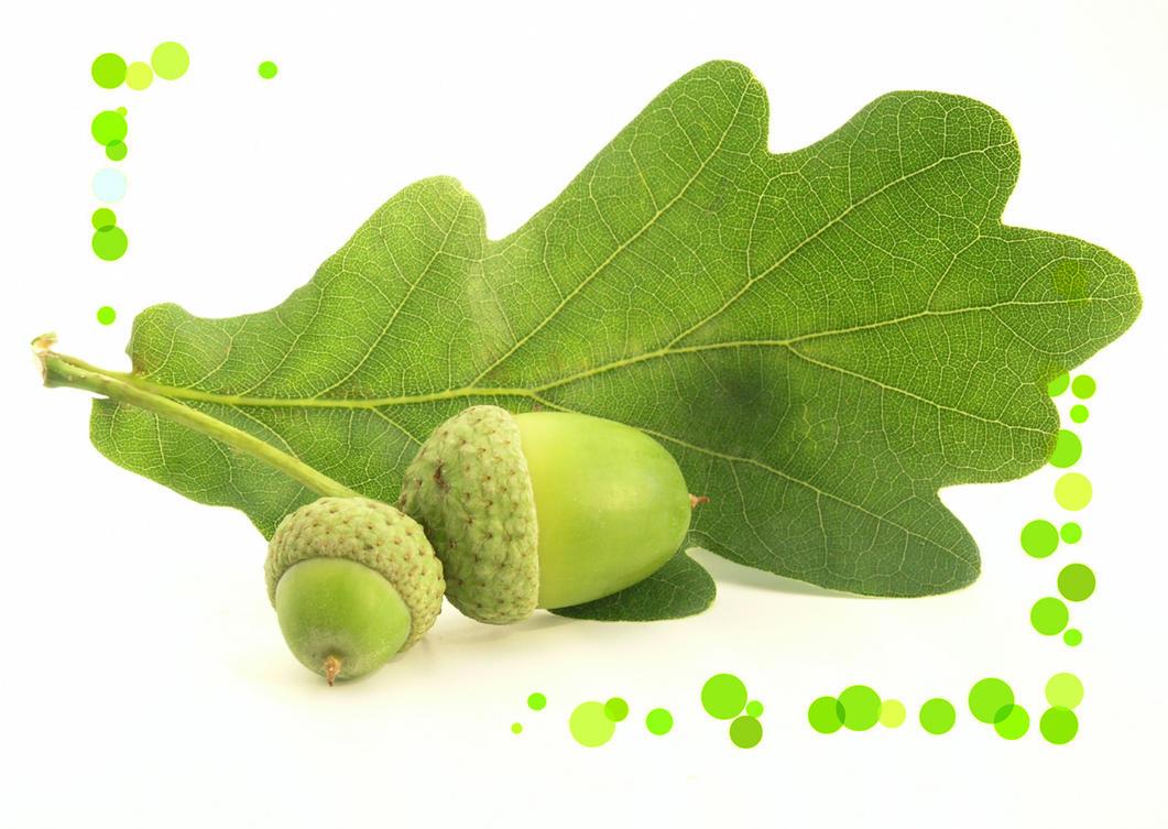 Oak by Galenpannan