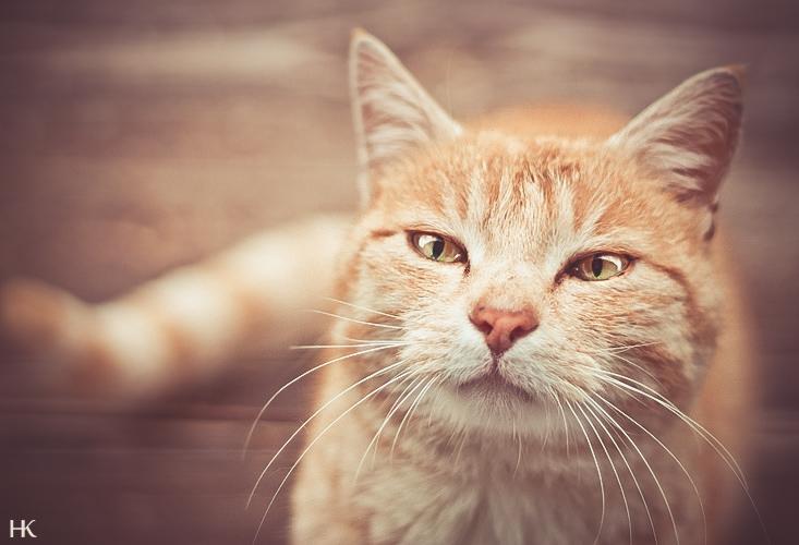 Sammy VII by Pfoten-Fotografie