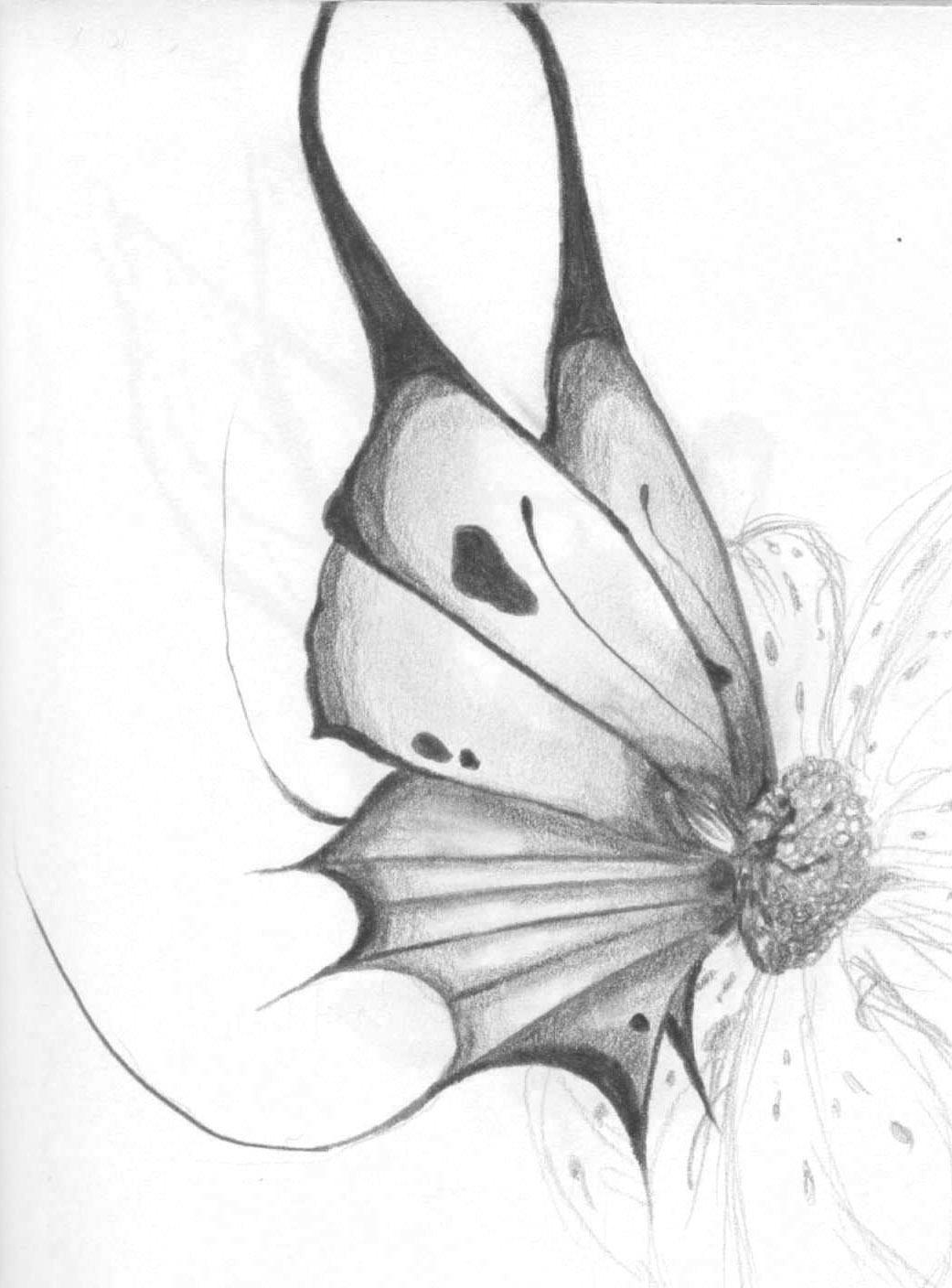 Butterfly On Sketched Flower By StarAphelion On DeviantArt