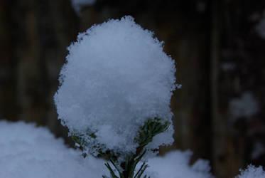 Last Snow... I hope