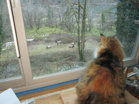 The Pusscat and the Elk