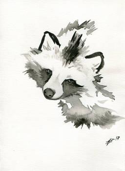 Tanuki or Raccoon