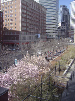 Boston Blossoms