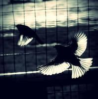 Flight by moonmandala