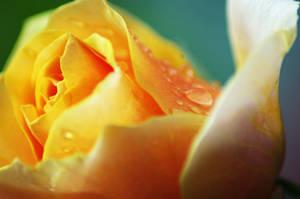 Orange Drops by moonmandala