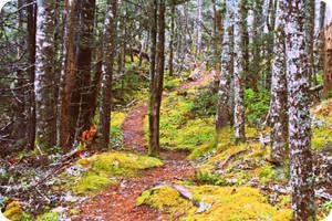 Trail by dustinbcp