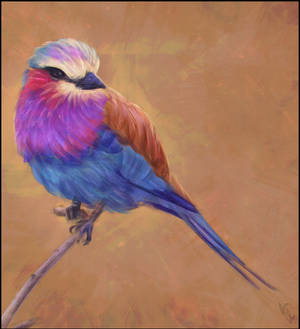 Bird Painting 3 Day #353