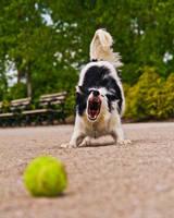 Throw The Ball by SpAzZnaticShuRIken