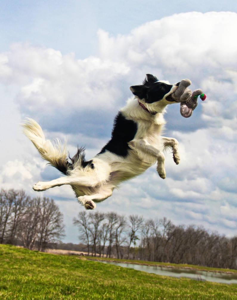 Canine Judo Jump Kick by SpAzZnaticShuRIken
