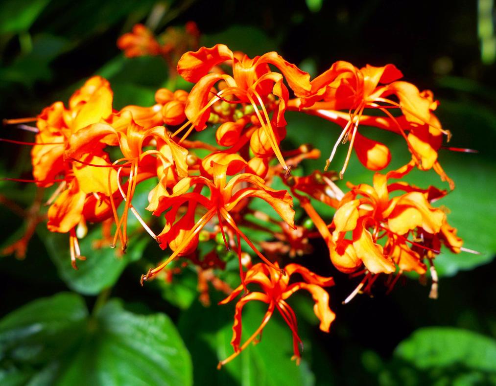 botanical flower VII - 2016 by Bildband