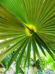 palm-tree -2018
