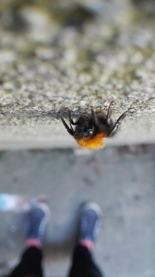 sweet bumblebee by Nathwolf