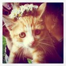 My Flower Cat :D by Susuki-chan-123