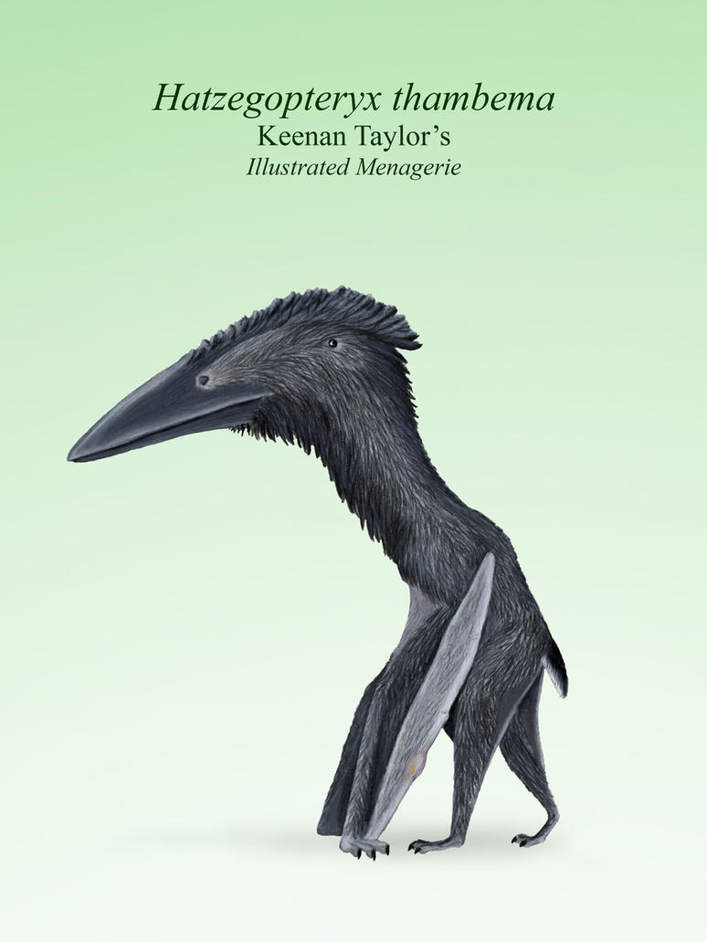 hatzegopteryx_thambema_by_illustratedmenagerie-dcdk689.jpg
