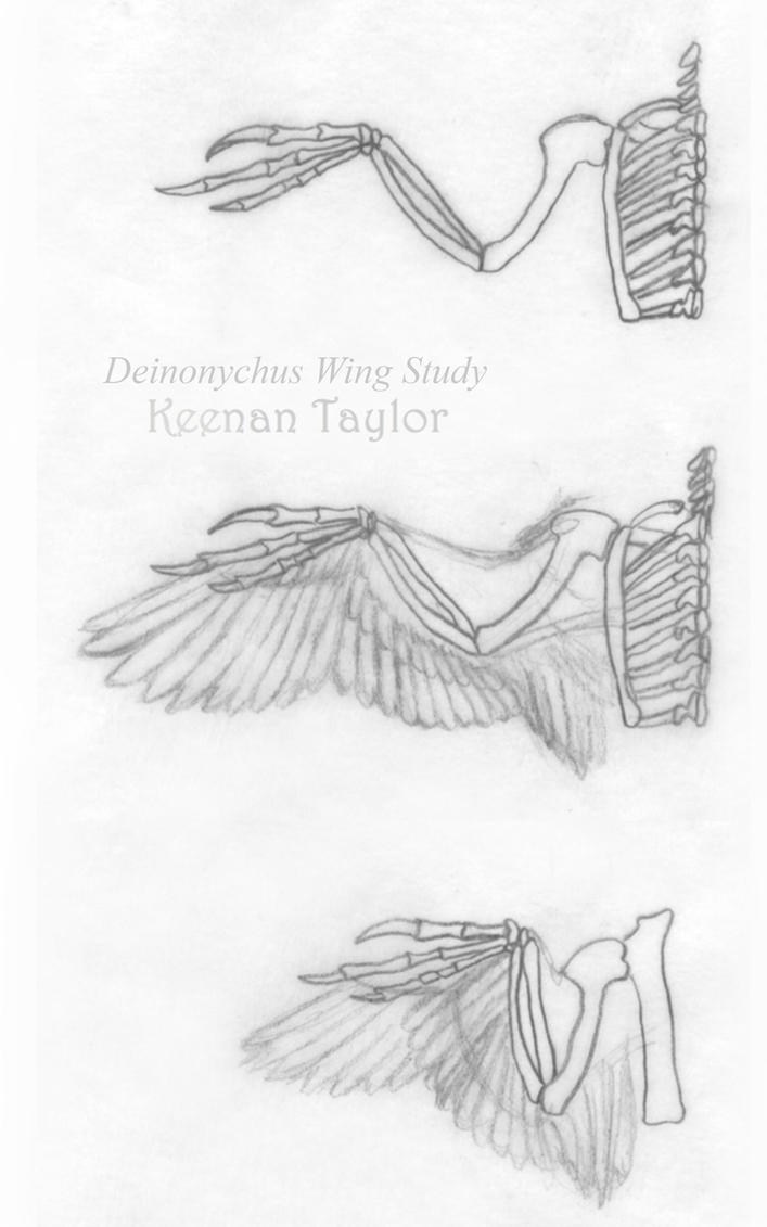 Deinonychus Working Papers 1 by IllustratedMenagerie