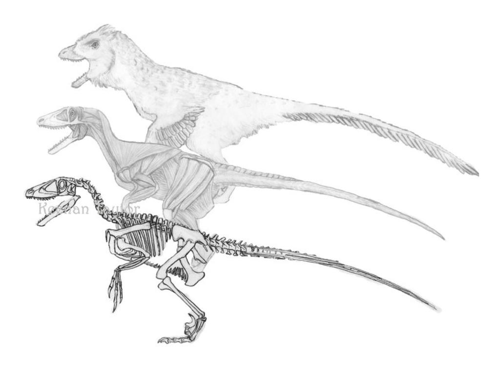 Deinonychus Working Papers 2 by IllustratedMenagerie