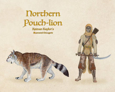 Northern Pouch-Lion