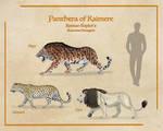 Panthera of Kaimere