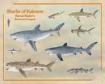 Sharks of Kaimere