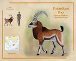 Pakardiant Ibex