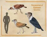 Teratorns of Kaimere
