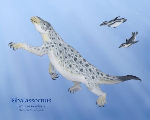 Thalassocnus