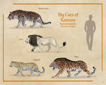 Big Cats of Kaimere