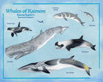 Whales of Kaimere