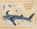 Eagle Sharks of Kaimere