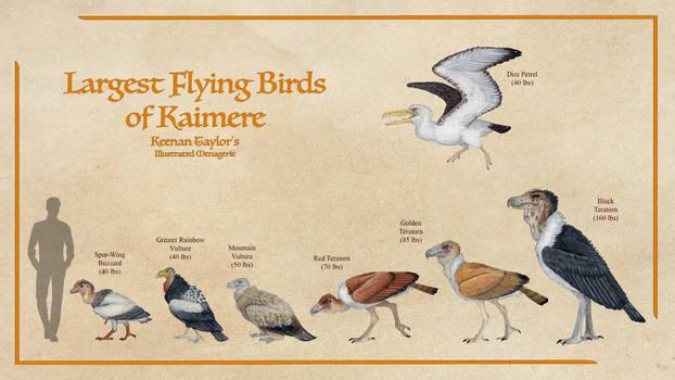 Largest Flying Birds of Kaimere