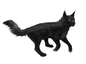 Cat by kukuzapol